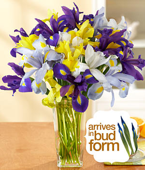 ProFlowers - Assorted Iris