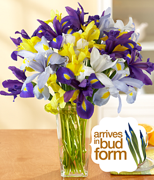 Assorted Birthday Iris