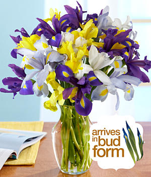 ProFlowers - Blessings Iris Bouquet