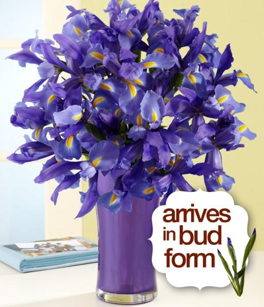 ProFlowers - 20 Blue Iris