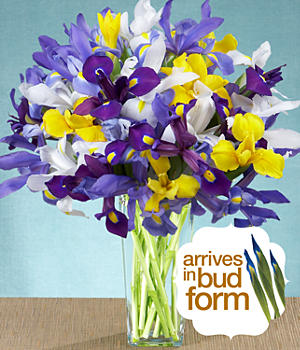 ProFlowers - Deluxe Assorted Iris