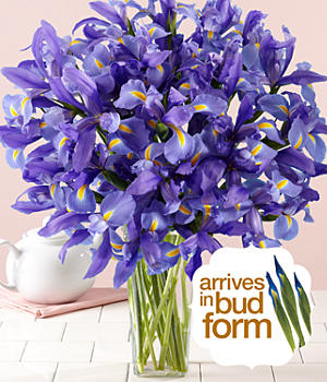 ProFlowers - 30 Blue Iris