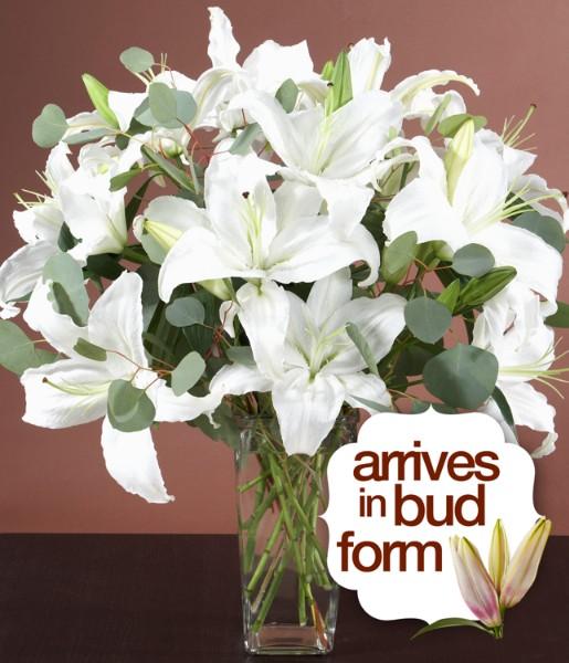 House Plants - Sympathy Lilies