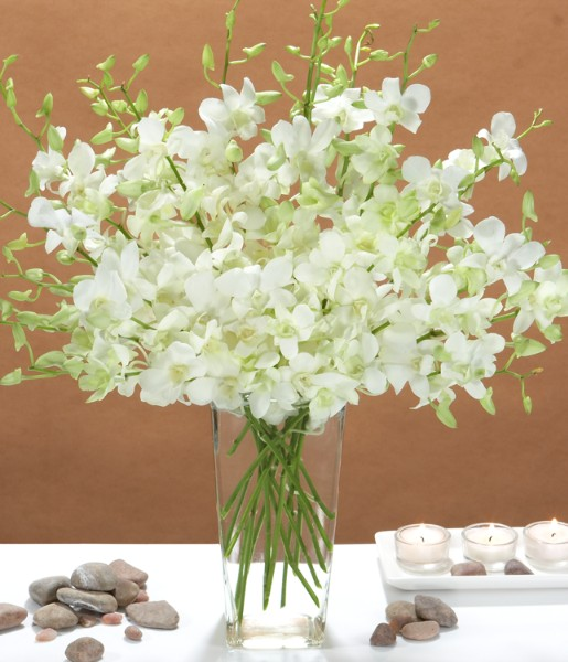 ProFlowers - White Dendrobium Orchids