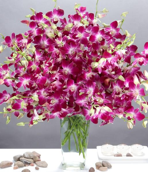 ProFlowers - Deluxe Purple Dendrobium Orchids