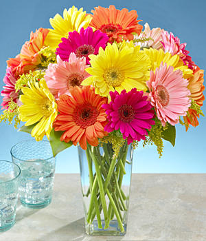 Assorted Cheerful Gerbera Daisies