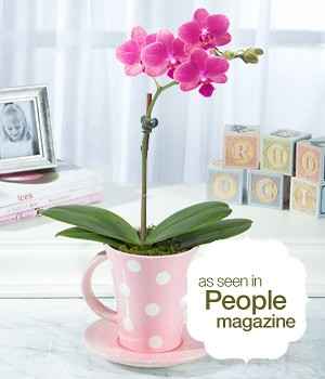 House Plants - Baby Love Orchid