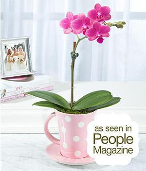 House Plants - ProFlowers - Plants - Pink Teacup Orchid