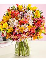 200 Blooms of Birthday Peruvian Lilies