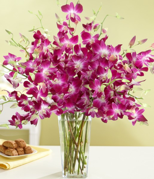 ProFlowers - Purple Dendrobium Orchids
