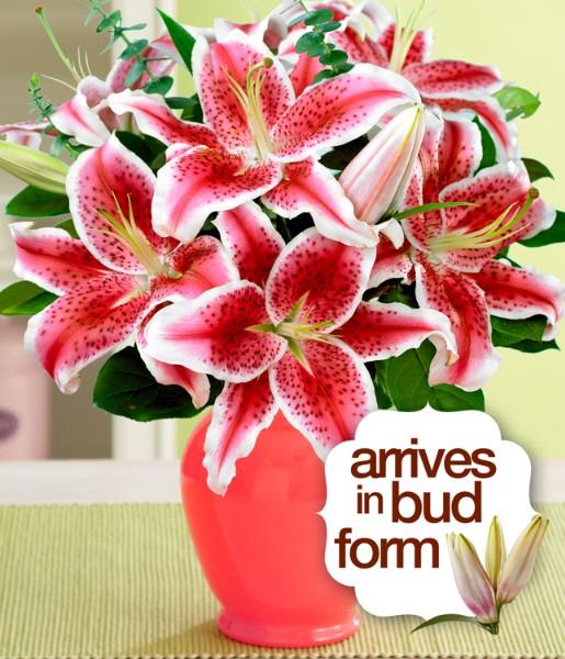 ProFlowers - Fragrant Stargazer Lilies