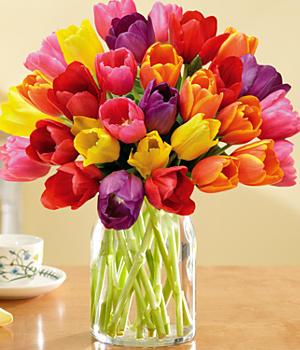 30 Multi-Colored Tulips