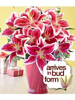 Deluxe Fragrant Birthday Stargazer Lilies