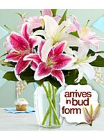 Birthday Oriental Lilies