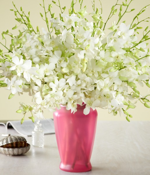 ProFlowers - Deluxe White Dendrobium Orchids