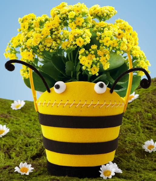 House Plants - Hap-BEE Birthday