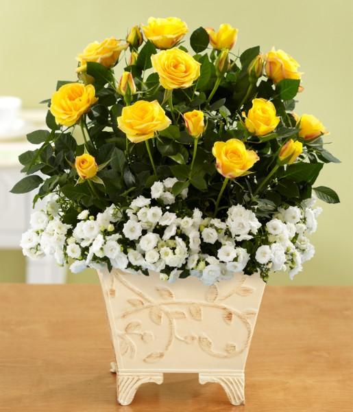 House Plants - Sunshine Cottage Roses