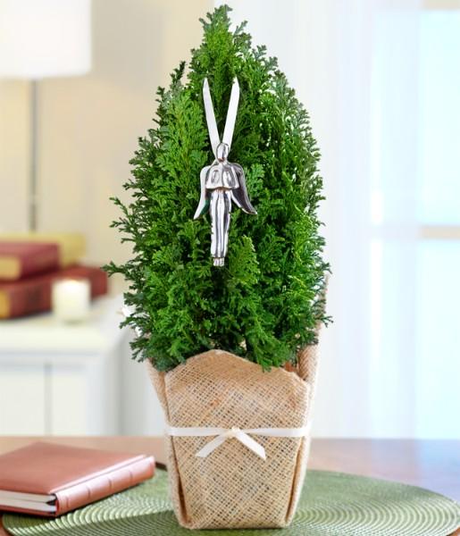 House Plants - Guardian Angel Tree