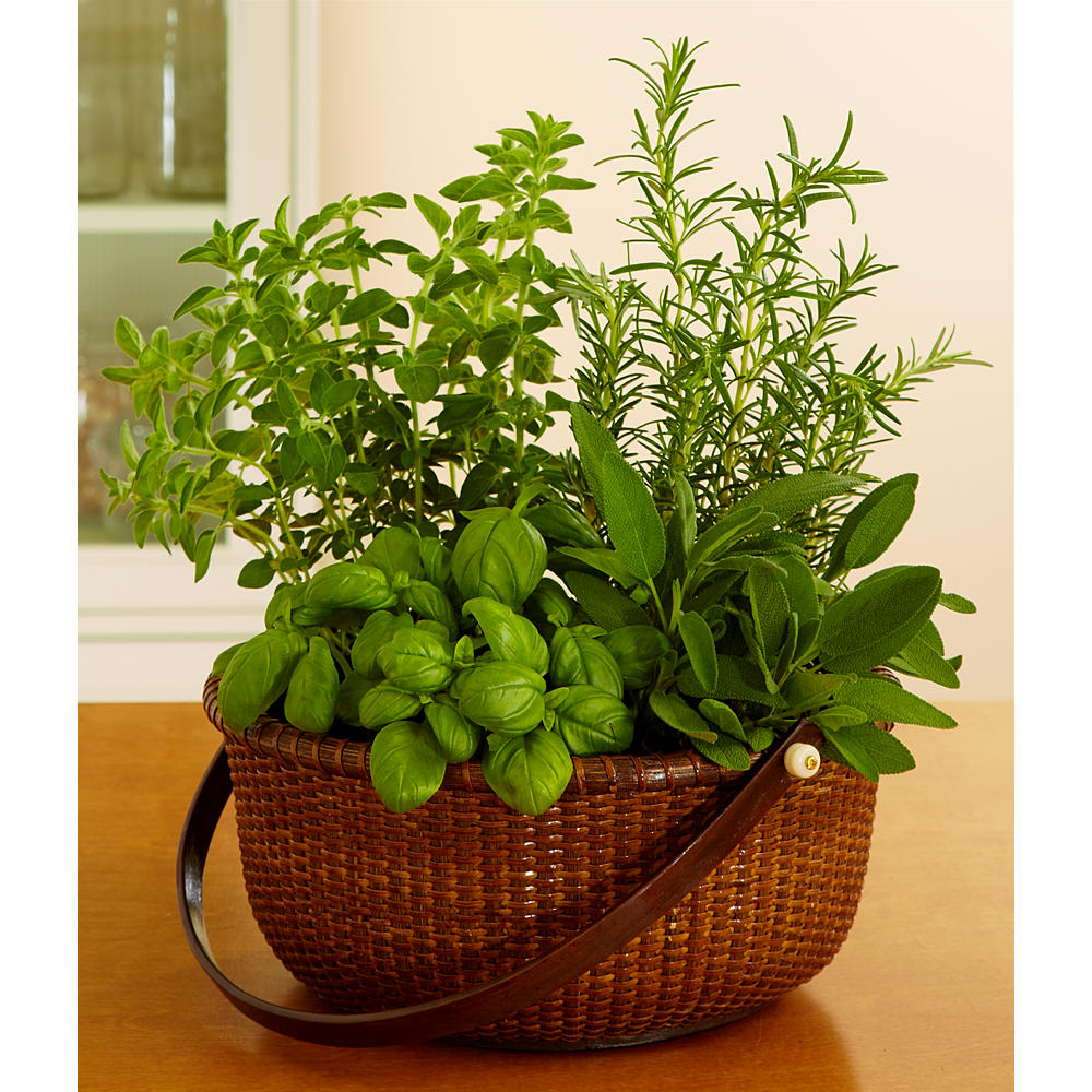 House Plants - Gourmet Herb Garden