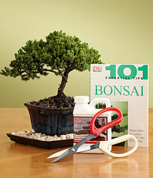 Ultimate Bonsai Kit