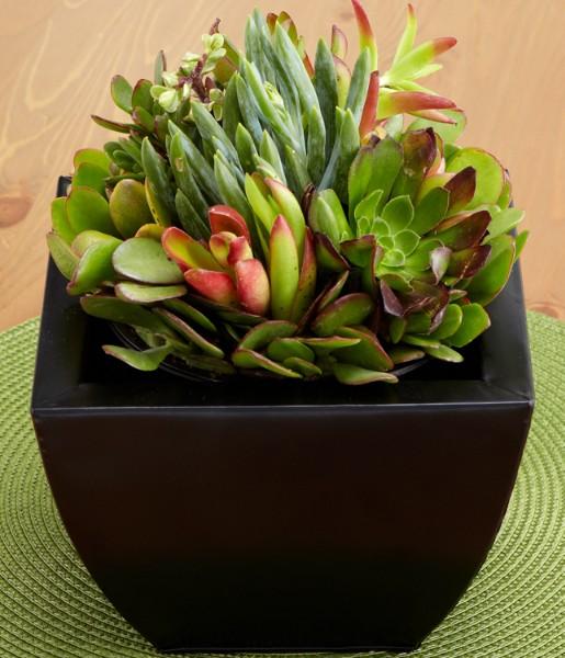House Plants - Deluxe Succulent Garden