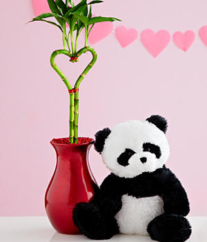 House Plants - Deluxe Heart Bamboo