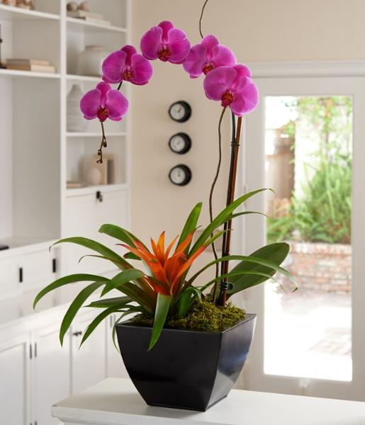 ProFlowers - Mardi Gras Orchid Garden