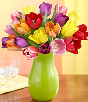 20 Multi-Colored Tulips for Mom
